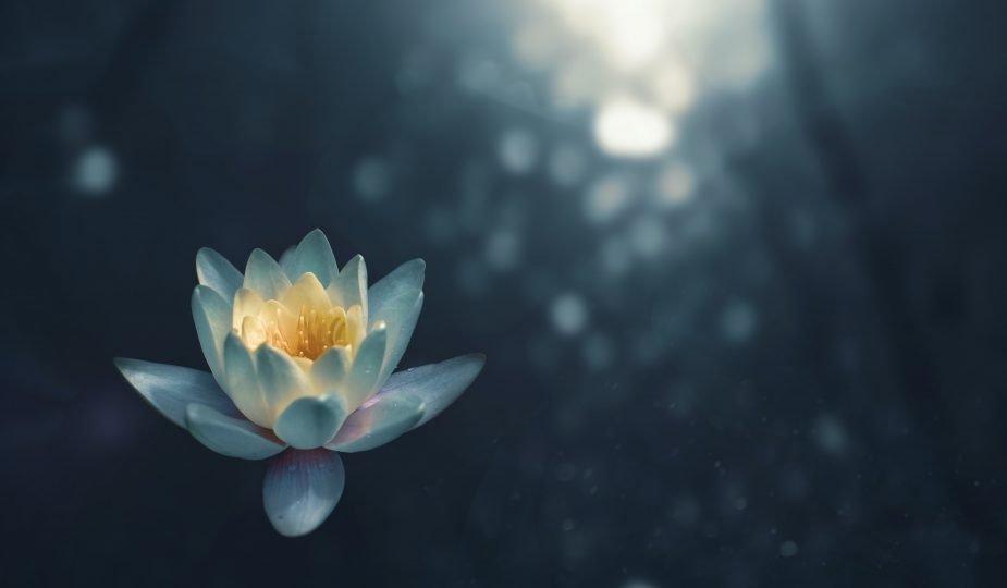 afbeelding lotus als symbool voor zwangere vrouw