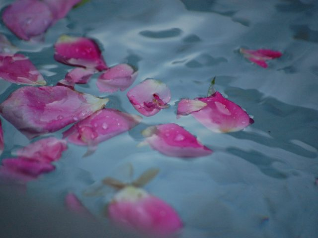 rose pattels on water symbolising calm water birth