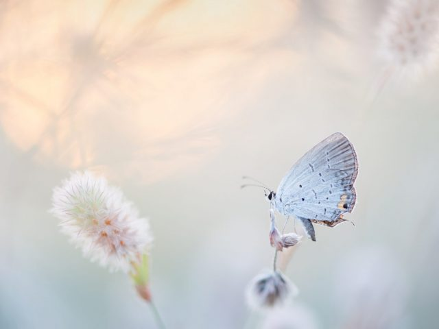 pastelle vlinder als symbool voor zachtheid bij baring